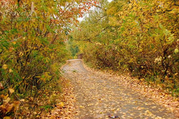 8 октября, золотая осень