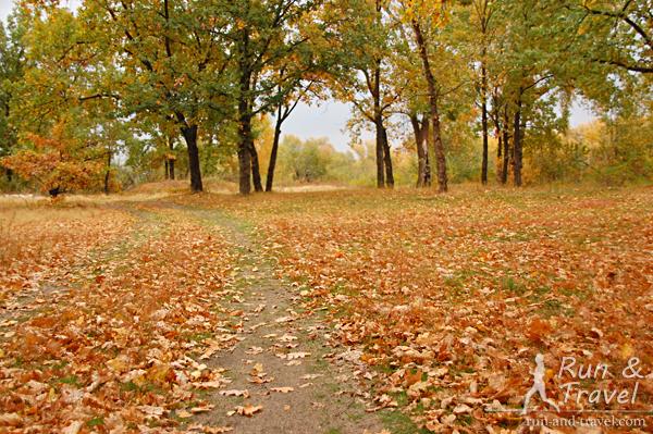 Осенние дороги в парке