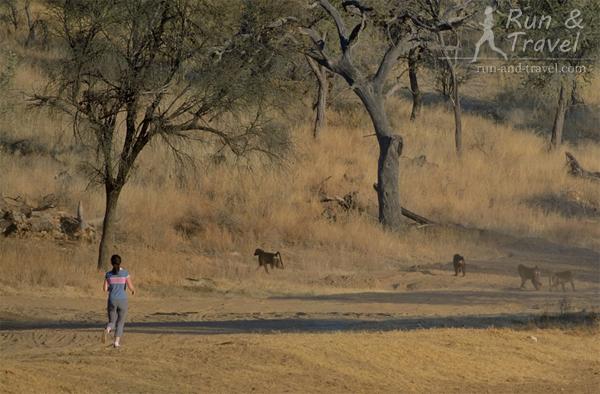 В компании с бабуинами, Намибия