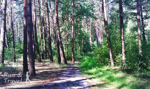В лесу карта помогает не слишком