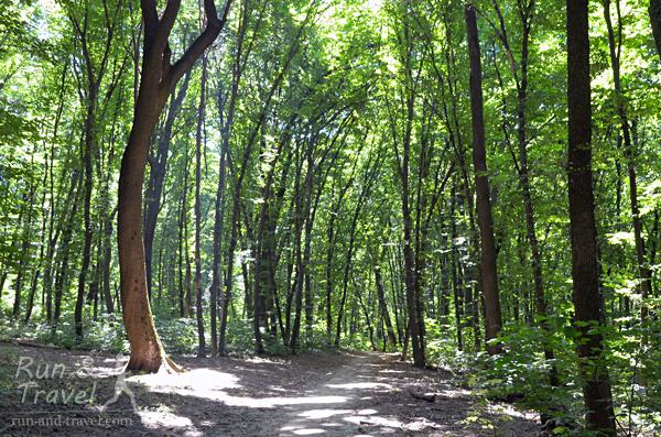 Тропинки Голосеевского леса