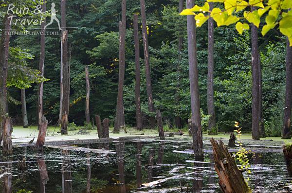 Кажется, именно здесь живет Кикимора болотная