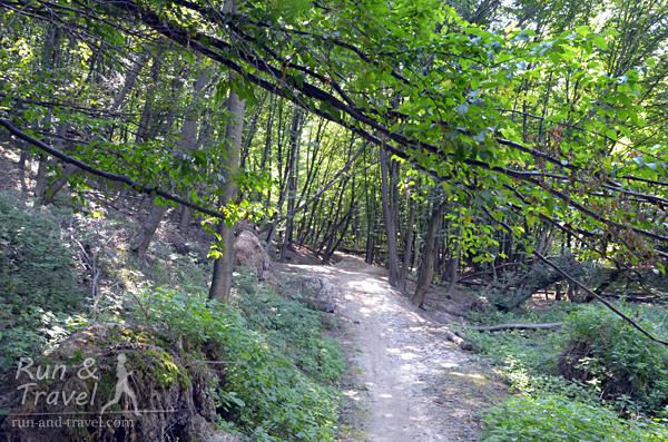 Тропы Голосеево
