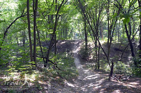 Типичный рельеф Голосеевского леса