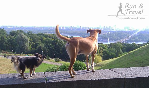 Любуюсь в компании утренними видами Киева из парка Славы