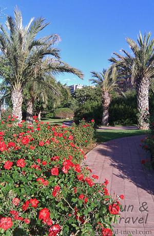 Пальмы, розы…почти зима в Валенсии