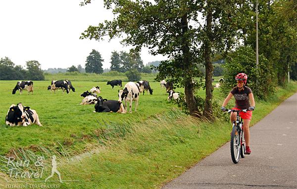 На велосипеде по голландским пасторалям