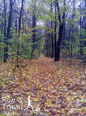 Тропинки, уводящие с территории ВДНХ в лес