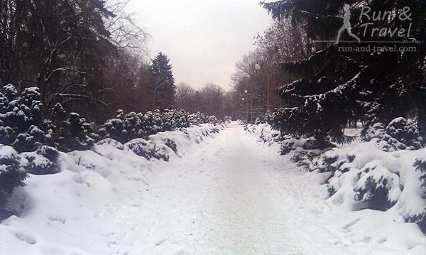 Любимая «финишная» аллея в январе