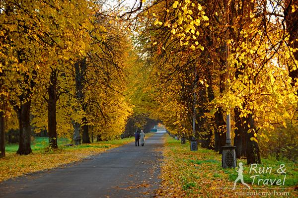 Главная аллея Экспоцентра золотой осенью (вторая половина октября)