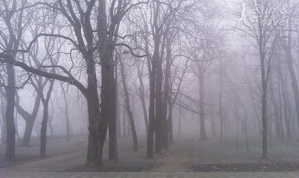 Туман нереальный, видимость несколько метров, конец ноября