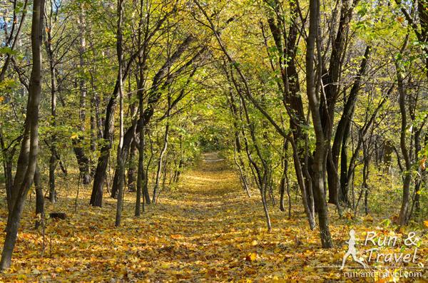 Голосеевский лес 18 октября