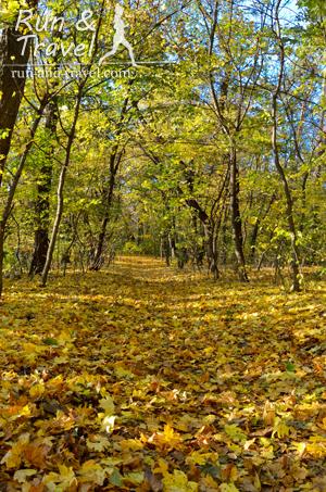 Тропы Голосеевского леса