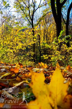 Осторожно на листьях!