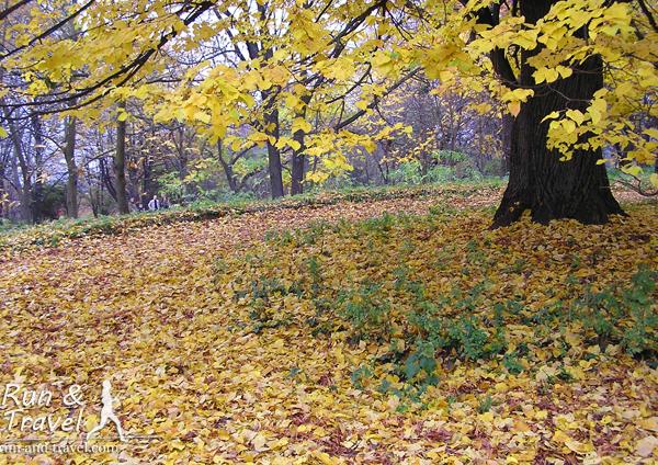 Осенние дорожки ботсада
