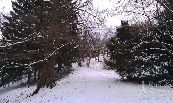 Зимние аллеи