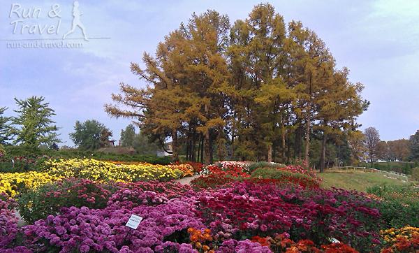 В октябре стоит заглянуть в сад хризантем