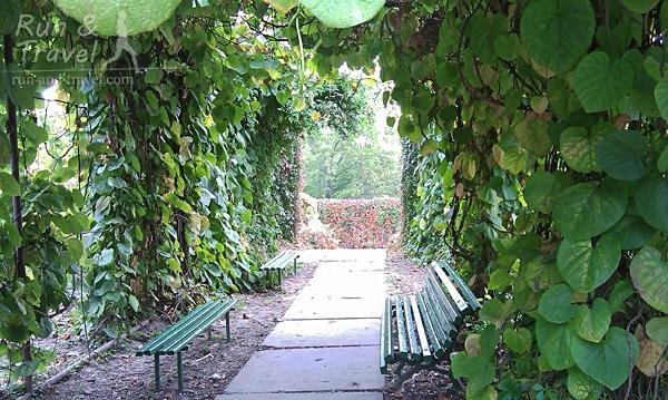 Сад вьющихся растений