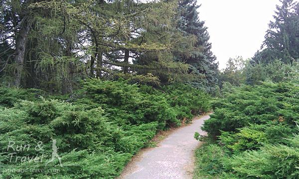 Зона хвойных растений, на этой аллейке приятно пахнет туей