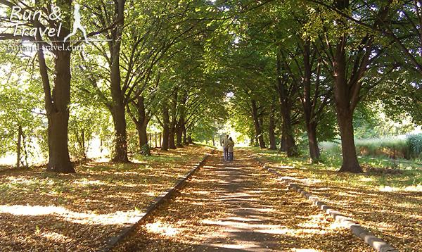 Осенние аллеи