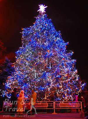 За красивыми елками лучше стартовать еще в темноте, но и при свете тоже ничего