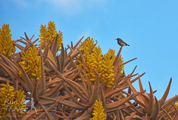 Цветущая крона, над каждой из которых летают и пьют нектар десятки маленьких птичек а-ля колибри