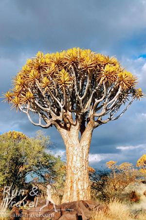 Странное и удивительное растение