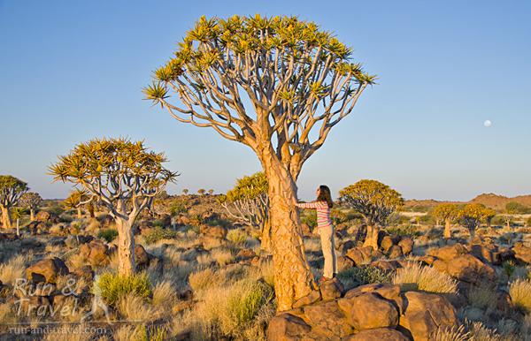 Чтобы был понятен масштаб и размеры «не-дерева», рост которого достигает до 9 м