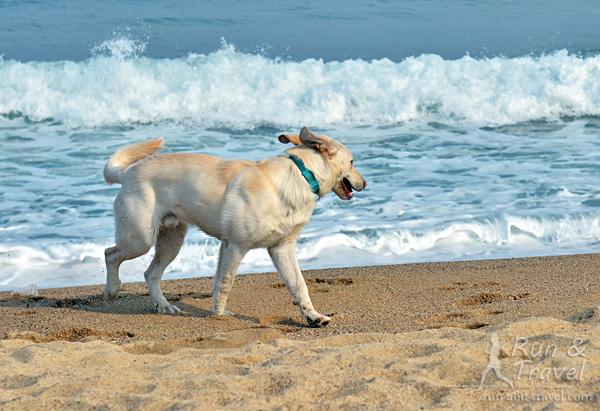 Барселонцы – большие любители собак, их здесь очень много