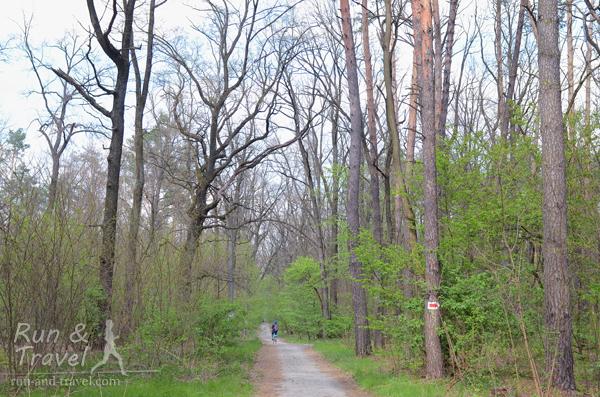 Маркировка веломаршрута – красные стрелки на белом фоне, нарисованные на деревьях