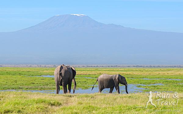 Классика Амбосели: слоны и Килиманджаро