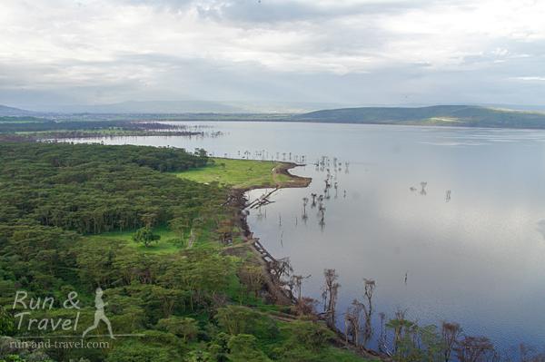 Озеро Накуру. Воды прибыло, затопило часть деревьев и дорогу