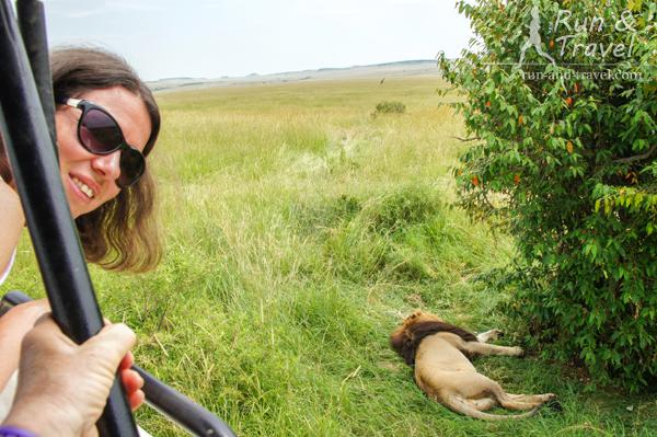 Фоточка с первым львом с гривой – the must. Масаи Мара