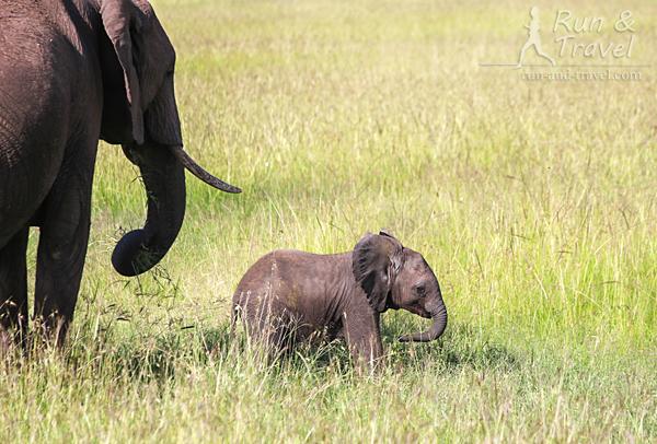 Мимимишное. Слонят было много, разных возрастов