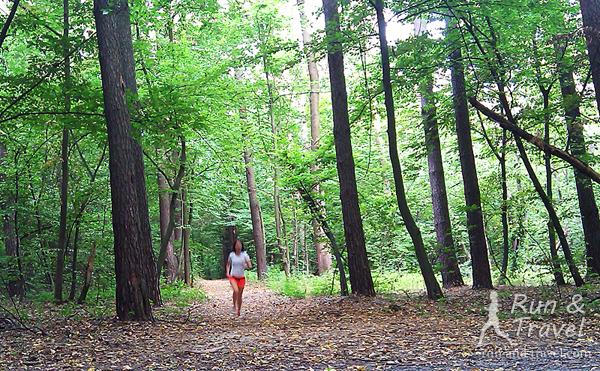 Только бег (ладно, пенсионерская трусца) и никаких цифр. Любимый киевский лес