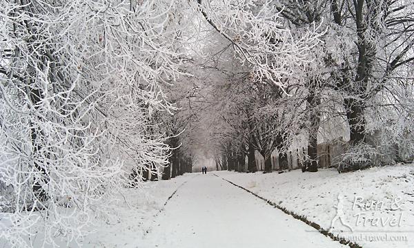 Зима в новом ботсаду