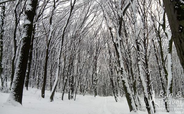 Зима в Голосеевском лесу