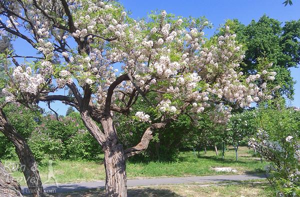 Кроме сирени и магнолий, в ботсаду полно других цветущих растений