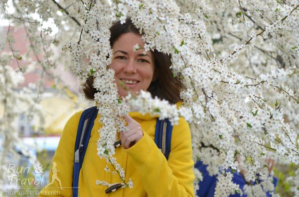 В конце марта в Братиславе уже все цветет, но прохладно (было до дня марафона)