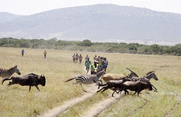 Так и представляю себе эту картину: я красивая в саванне среди быстроногих кенийцев и антилоп (как вариант: безнадежно отставшая и доедаемая львом)