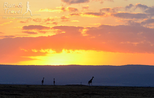 Жирафы тоже уже проснулись