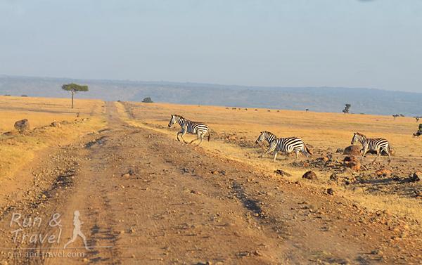 И зебры