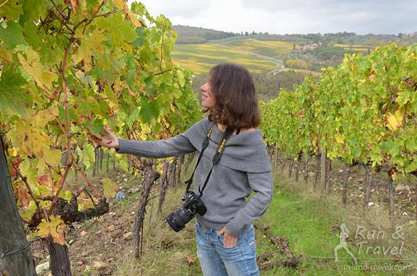 Виноград уже собрали