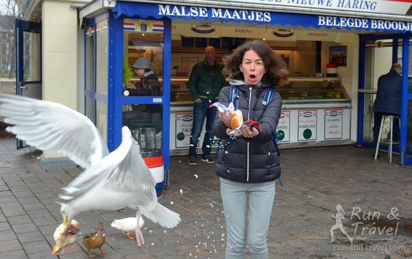 Отчет о марафоне в Роттердаме: организация поездки